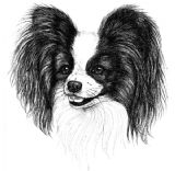 Papillon Puppy Receipt Book